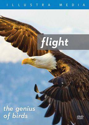 Flight: The Genius of Birds