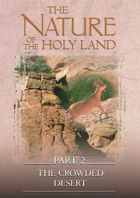 Nature Of The Holy Land #2: Crowded Desert - .MP4 Digital Download