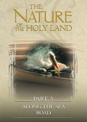 Nature Of The Holy Land #3: Along The Sea Road